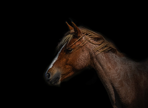 Horses Portrait Photograph