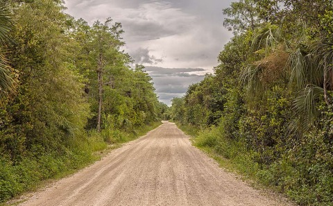 Loop Road Dust Road Track in the Florida Everglades in America