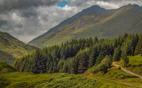 Isle Of Skye in Scotland Pine Forest and Mountain Landscape