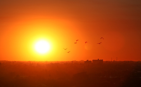 A Flock of Birds at sunrise over buildings with an orange sky in America
