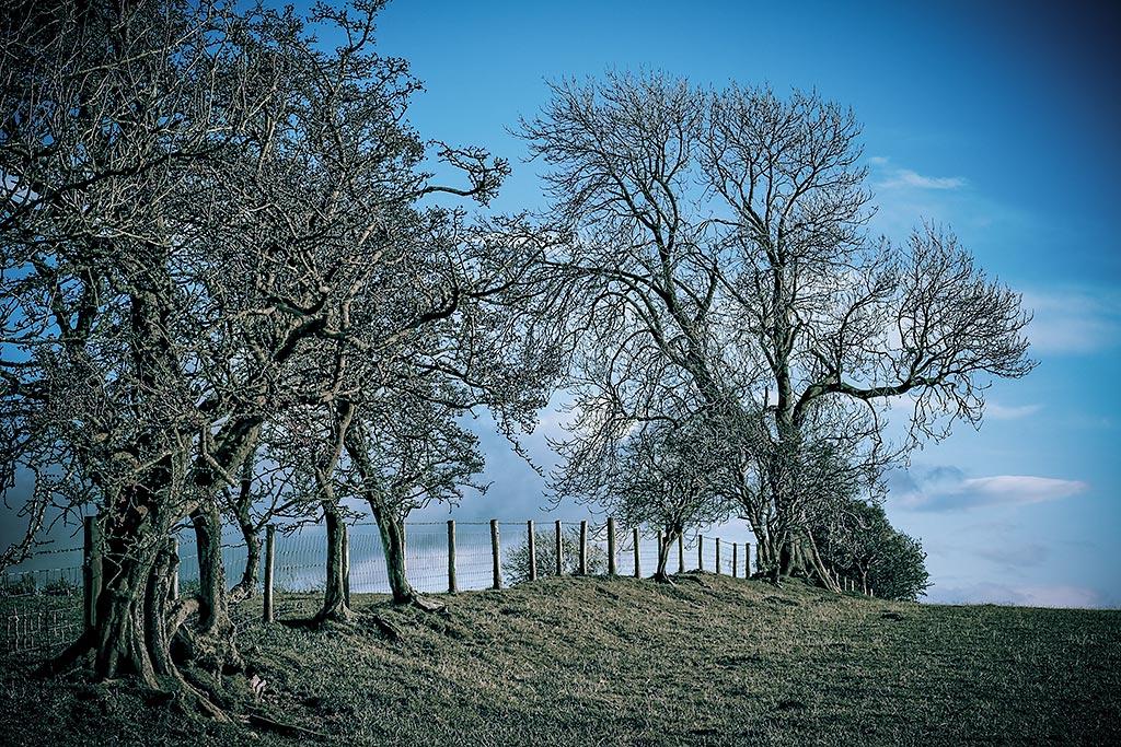 Landscape antonyz photography for Garden trees england