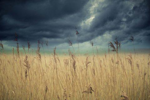 antonyz landscape storm clouds over grassland