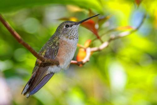 Bright Green Hummingbird sitting in a tree close up