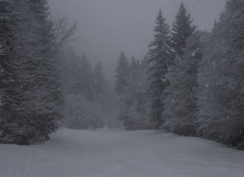 snow-scene-incorrectly-exposed-with-additional-exposure-compensation