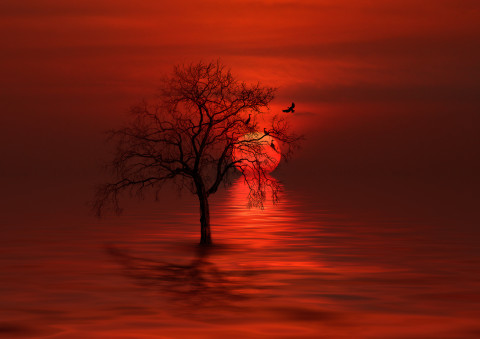 red-sunset-ocean-tree-waterscape-birds-roosting