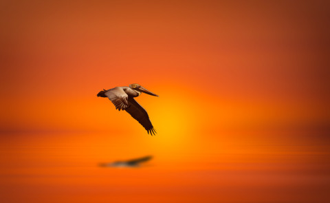 sunset-orange-sky-pelican-waterscape-fine-art