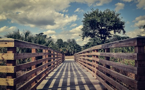 wooden walkway through tropical florida everglades landscape
