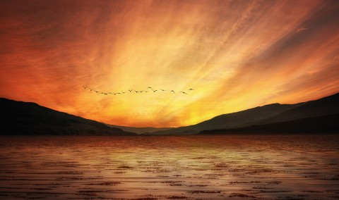 Birds flying formation over Scottish Loch at sunset