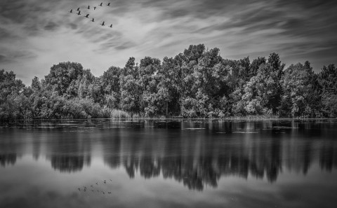 british lake with geese in v formation with reflections black and white