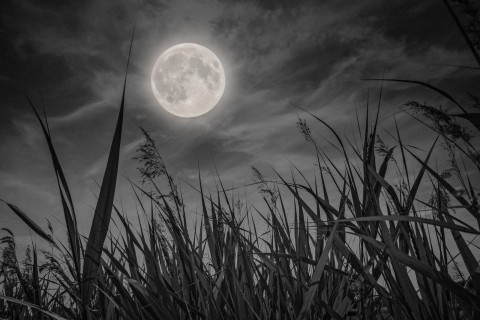 harvest-moon-grass-landscape-low-field-of-view