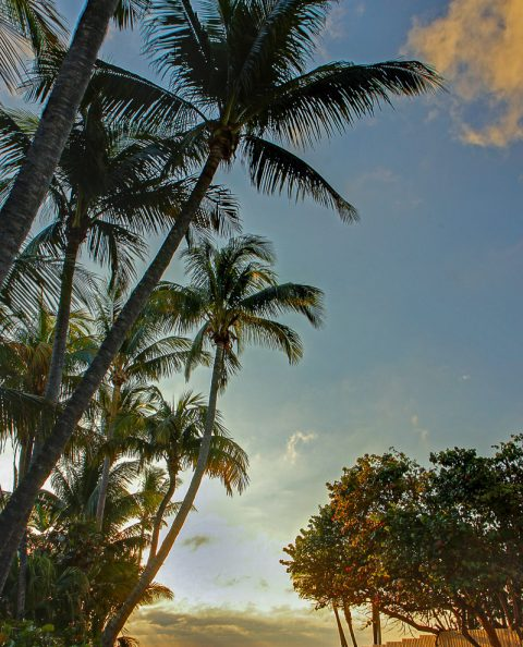tropical beach palm trees walkway at sunrise in florida
